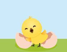 Chicken is born