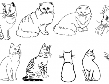 Outlined cats