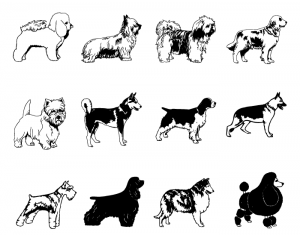Vector long haired dogs