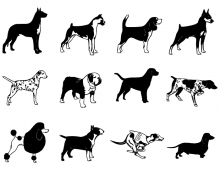 Short haired dogs