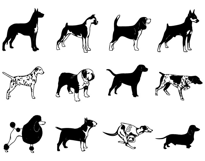 vector short haired dogs
